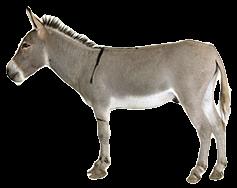 donkey-only